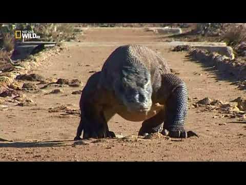 Nat Geo Wild: Первая тройка самых опасных животных. Голодные игры (1080р)
