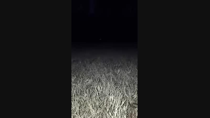 Он появится из темноты