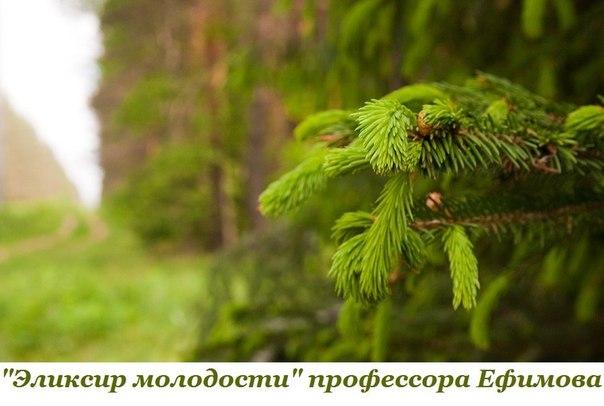 ЗОЛОТОЙ РЕЦЕПТ ПРОФЕССОРА ЕФИМОВА (1 фото) - картинка