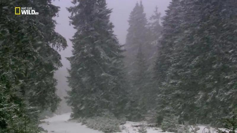 Зимняя страна чудес (Winter Wonderland)