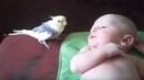 Просто Чудо! Попугай ПОЁТ для малыша!