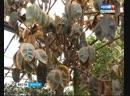 Тропические растения вымерзли в оранжерее Сибирского института физиологии и биохимии растений