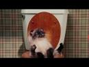 кинокомедия/момент с котом