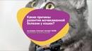 Какие причины развития мочекаменной болезни у кошек?