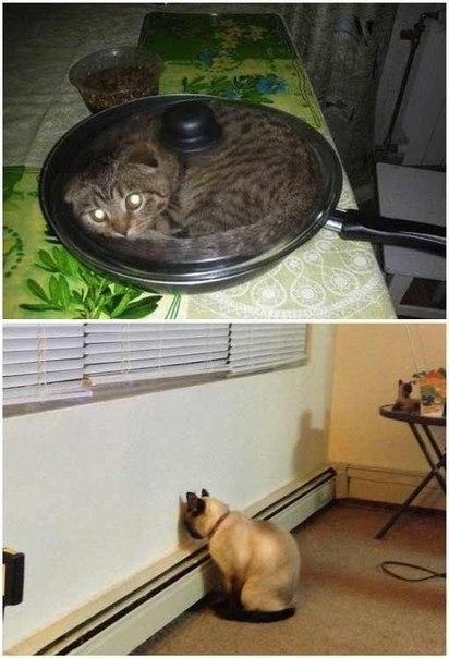 Мы коты и делаем что хотим, юмор и приколы, анекдоты и смешные