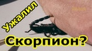 Ужалил скорпион, что делать Как избежать встречи со скорпионом