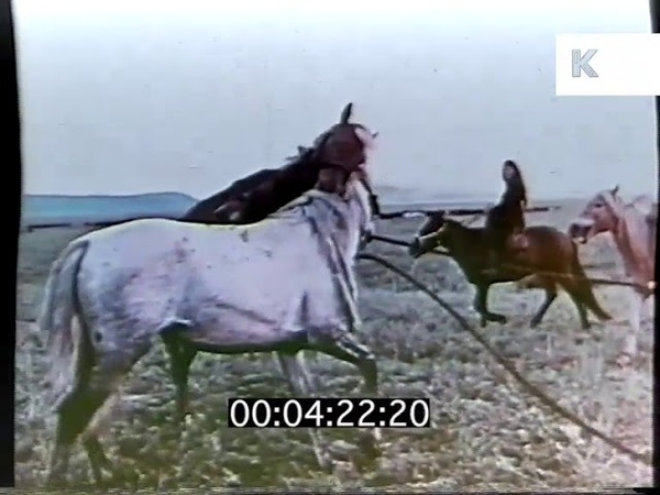 Rural Life, Cattle Herding, Early 1970s China