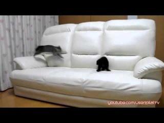 Два котэ исполняют. Кошачий мортал комбат.