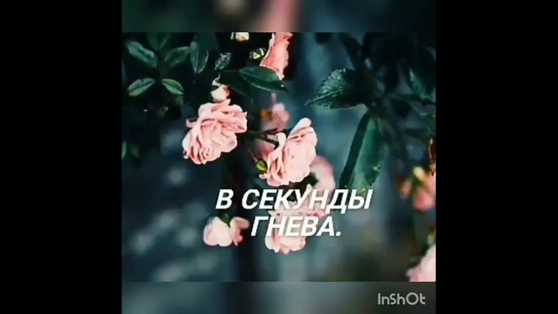 Sabr_terpi_Bjop005g9It.mp4