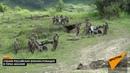 Учение русских военных в Абхазии