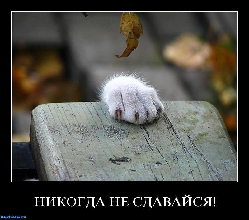Зарина Бегешева - фото №11