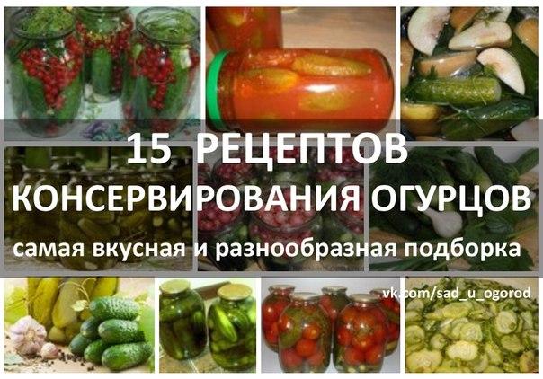 Огурцы - рецепты - Рецепты и кулинария на Поварёнок Ру