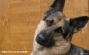 Если держишь собаку на привязи не ожидай от неё привязанности.(а. Вильметр)