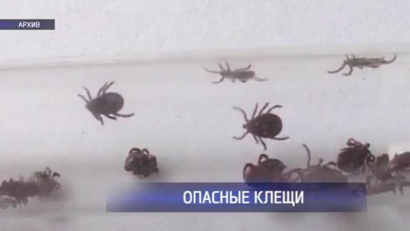 В Оренбуржье зафиксирован ещё один случай заражения энцефалитом