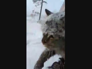 В Иркутской области ребенок спас котика, который застрял под машиной в мороз