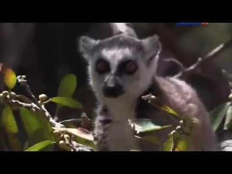 Природа Мадагаскара Докментальный фильм о животных В мире интересного и невероятного Madagascar