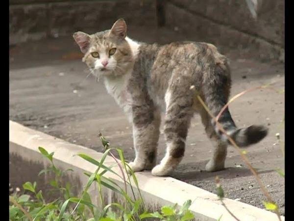 В Уфе в подвале дома заживо замуровали кошек » Freewka.com - Смотреть онлайн в хорощем качестве