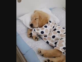 Спокойной ночи!😍