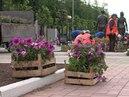 Около 350 тысяч цветочных саженцев в этом году будут высажены на клумбах Йошкар-Олы