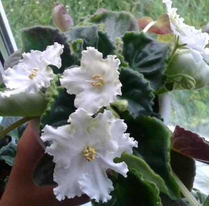 Цветы у Ликки JPt3LDkPVMI