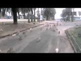 Голодные кролики атакуют