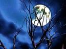 Pete Tex-Sail along silvery moon