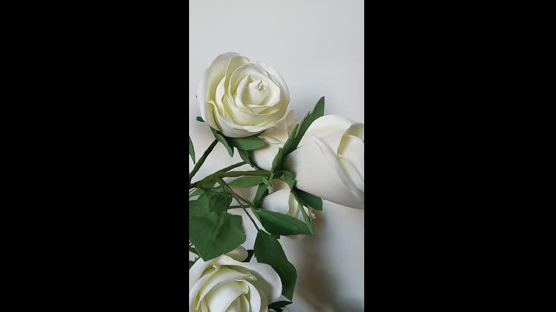 Роза Mount Shasta