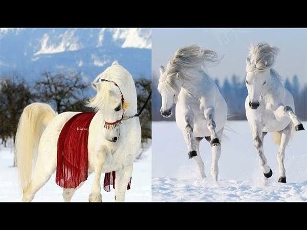Cute And funny horse Videos Compilation cute moment of the horses Soo Cute! 27