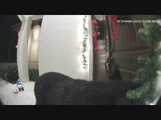 В США медведь позвонил в дверь и ушёл, когда его попросили