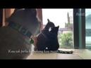 Kucing Galau - Asalkan kau bahagia