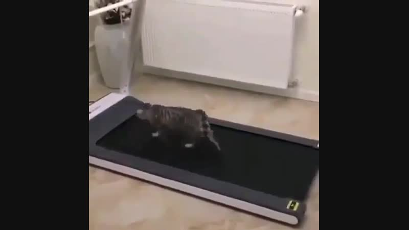 Kitty trying to figure out a treadmill