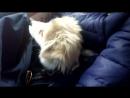 Пхеньян Мальчик едет к дедушке со своим лучшим другом =)
