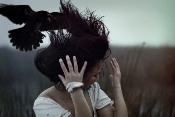 1 сонник ворона в доме залетевшая во сне видеть к чему снится?