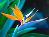 Giovanni Marradi - Petite Fleur