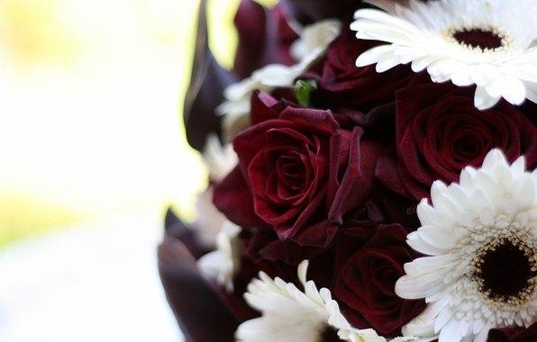 фото живых цветов: