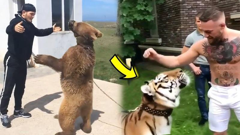 McGregor vs Khabib PETTING TIGER vs BEAR in RUSSIA- WHO WINS?- UFC 229