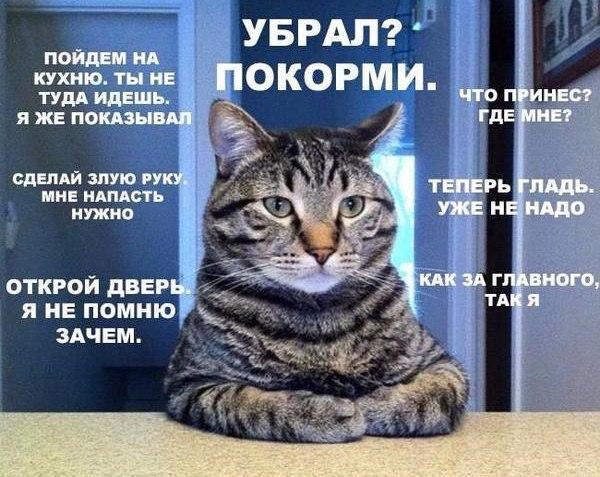 https://pp.vk.me/c7010/v7010530/9ad2/ay4GSzLQbFk.jpg