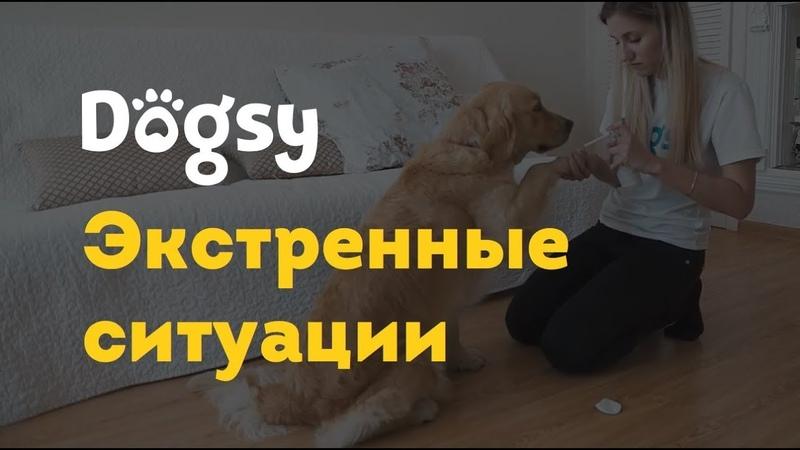 3 Инструкция догситтера Dogsy Экстренные ситуации