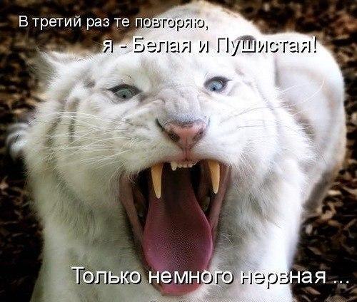 http://cs618327.vk.me/v618327334/1c2f/KkF1SjrQa8c.jpg
