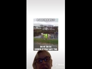 Meme miner under attack