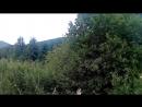 Гриби в карпатах-Грибы в Карпатах in Carpathians 2017-gr-grib-karpaty-sport-qq-scscscrp