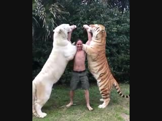 Кормление очень больших котиков из бутылочки