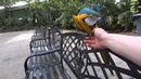 Close encounter with a smart macaw parrot