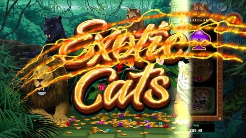 Exotic Cats Online Slot Promo казино Голдфишка