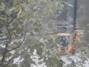 г. Электросталь вандал разбил стекла экскаватора-погрузчика «JCB »