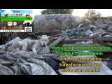 Видеоролик, снятый центром спасения животных, о хаски, выжевшей среди мусора  Первоисточник: http://www.dogtales.ru/?p=6379