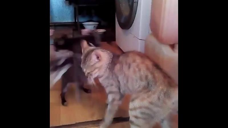 Здравствуй, тетя кошка!..