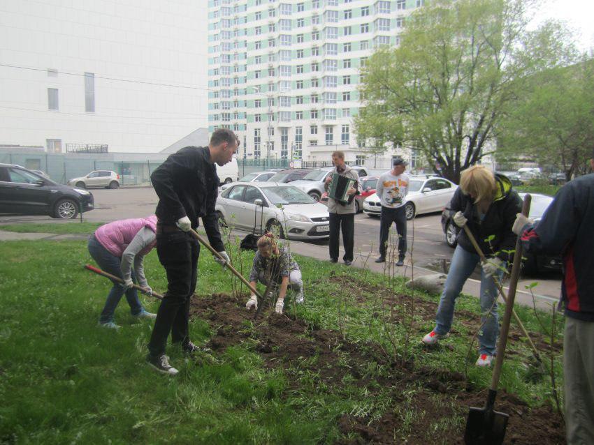 Молодые кустарники украсили семь дворов в Ховрине