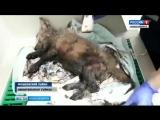Новосибирцы спасли от гибели щенка, застрявшего в луже гудрона