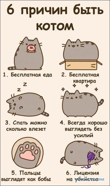 Картинки для дневника личного коты